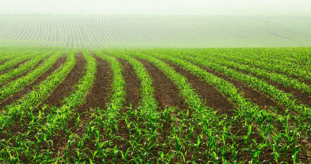 """עו""""ד משק חקלאי   עו""""ד בן ממשיך   ירושת משק חקלאי   עו""""ד מושבים"""